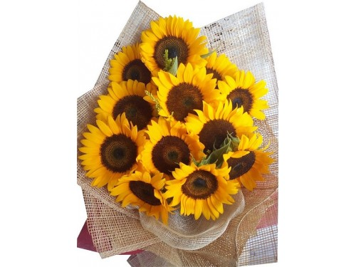 12 sunflower