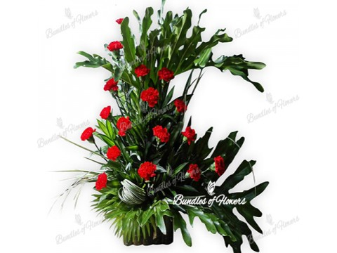 Red Carnations in Basket