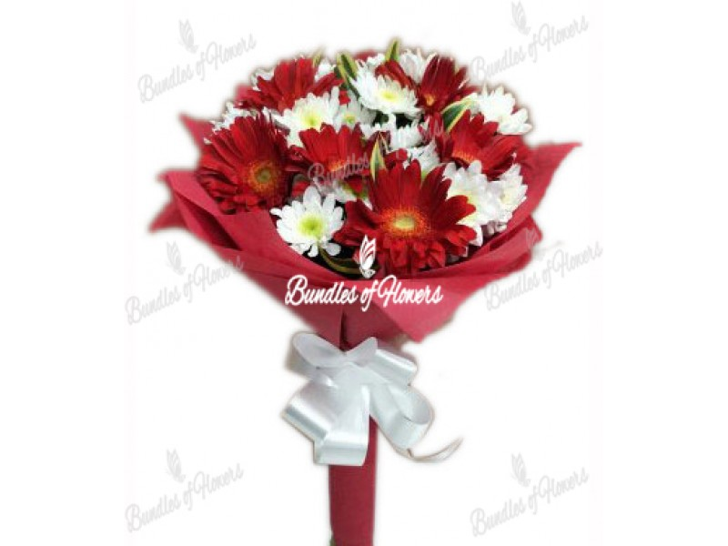 10 Red Gerberas with Mums