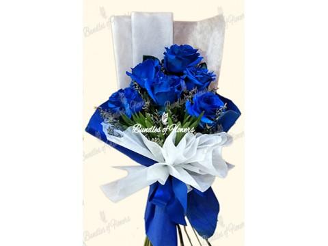 6 Ecuadorian Blue