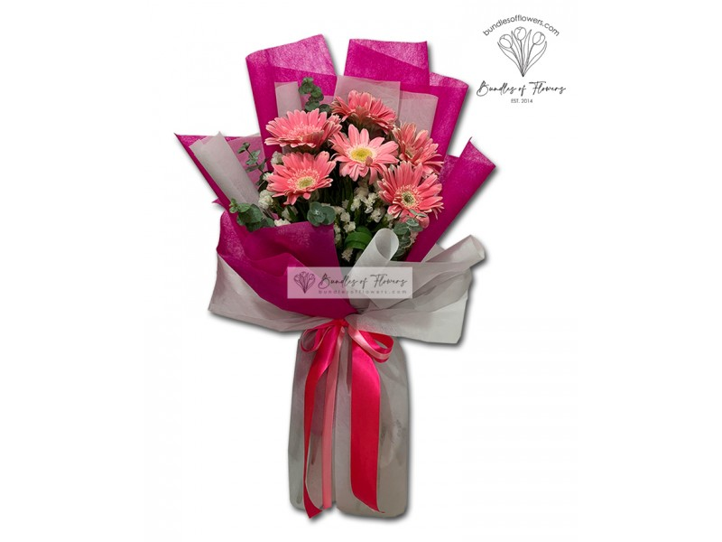 6 Pink Gerberas