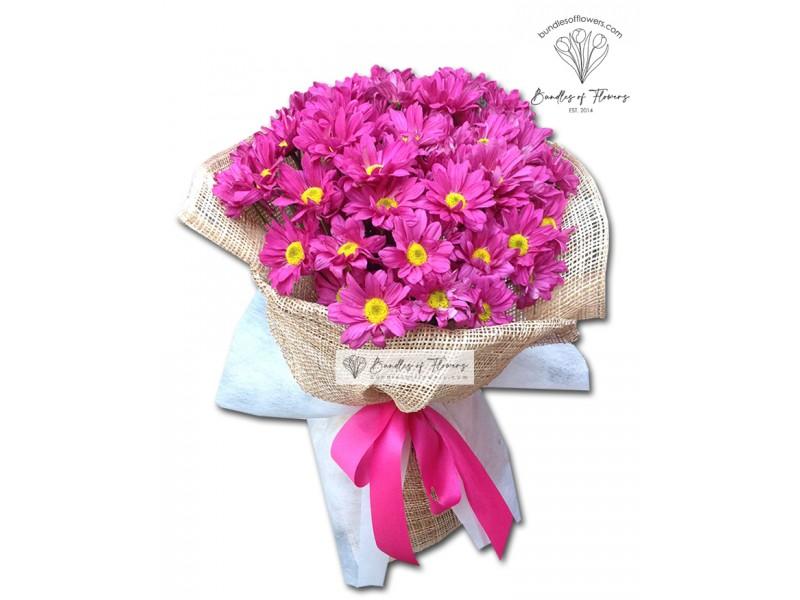 Fuchsia Pink Mums