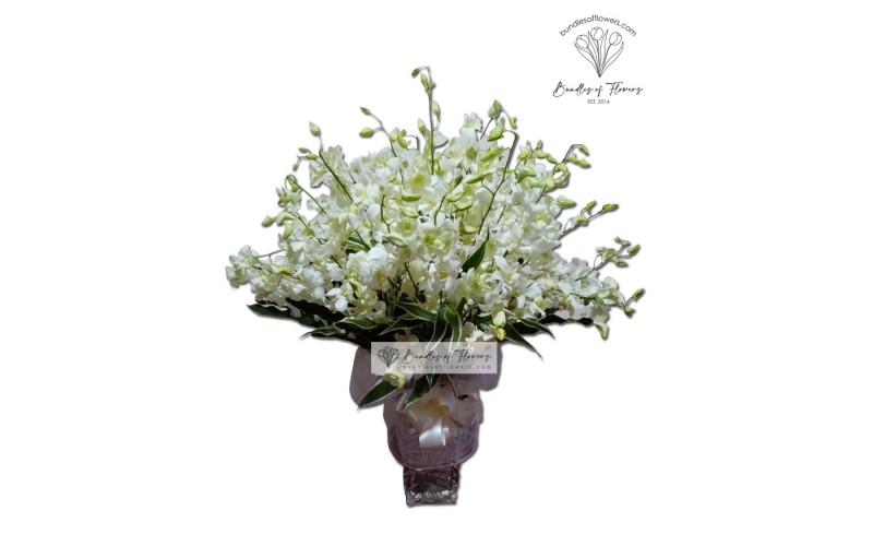 White Orchids in Vase