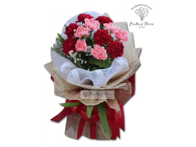 Carnation Red And Pink