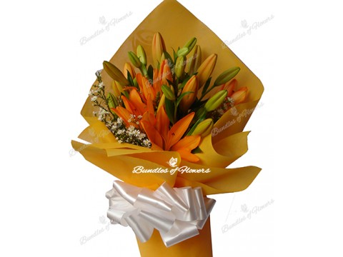 Asiatic Orange Lilies